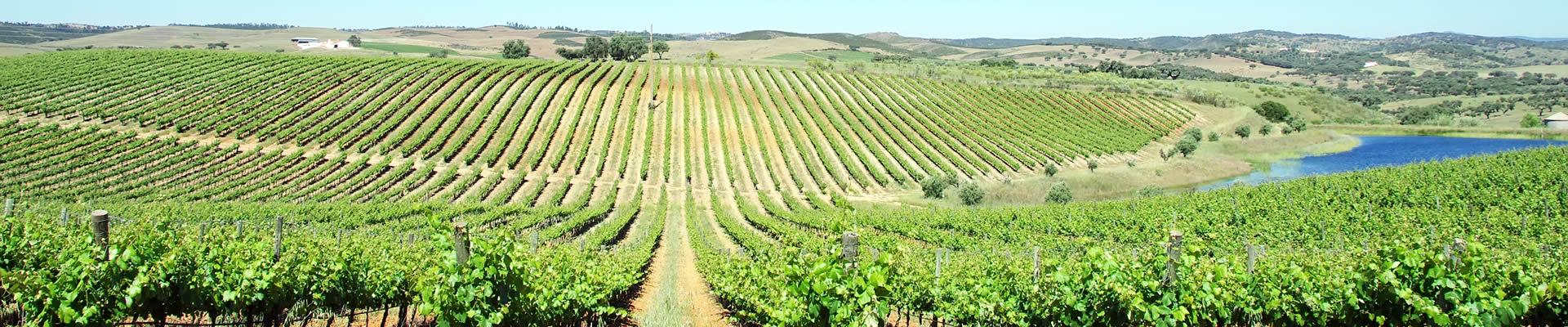 Portugese vineyards