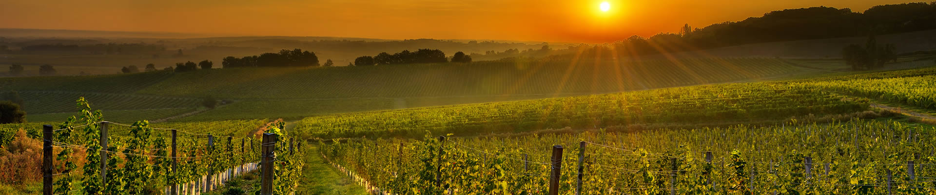 Sunset over vineyard in South of France