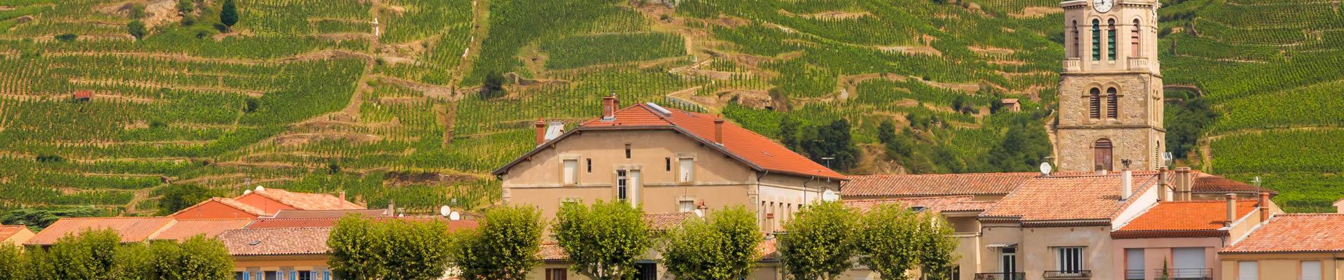 Vineyards in Rhône Valley, France