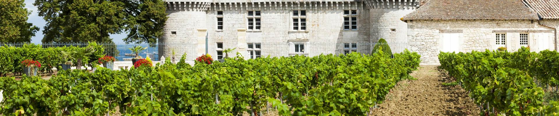 Bergerac vineyard