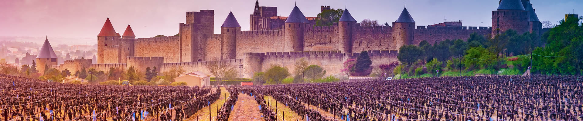 Midieval city of Carcassonne from a vineyard in Languedoc-Roussillon