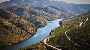 port vineyard